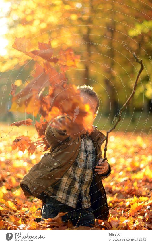 Auf die Fotografin Freizeit & Hobby Spielen Kinderspiel Mensch Kindheit 1 3-8 Jahre Natur Herbst Blatt Garten Park Wald werfen frech Fröhlichkeit Gefühle