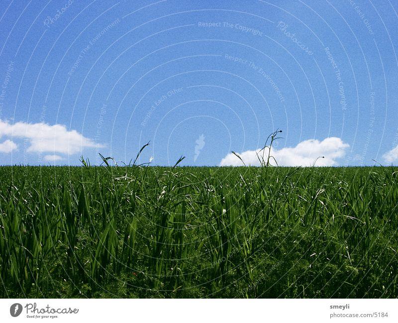 Hinterm Horizont geht's weiter Wiese Gras Wolken Einsamkeit ruhig Zufriedenheit grün Park Himmel Natur blau