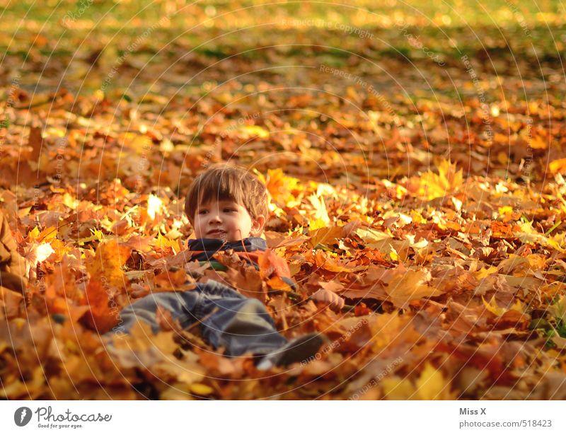 Versteckt Mensch Kind Natur Freude Blatt Wiese Gefühle Herbst Spielen Garten liegen Stimmung Park Freizeit & Hobby Zufriedenheit Kindheit