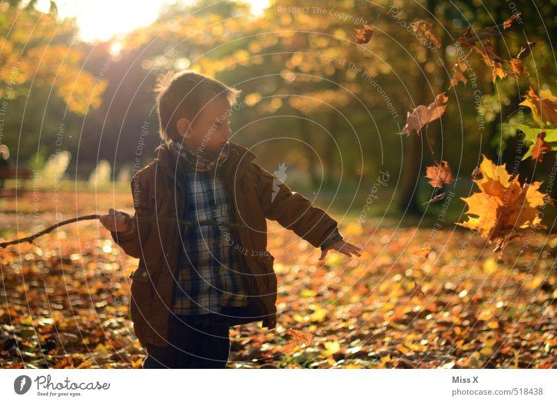 Herbst Freizeit & Hobby Spielen Kinderspiel Garten Mensch Junge 1 3-8 Jahre Kindheit Blatt Park Wiese Wald werfen Stimmung Freude Fröhlichkeit Lebensfreude