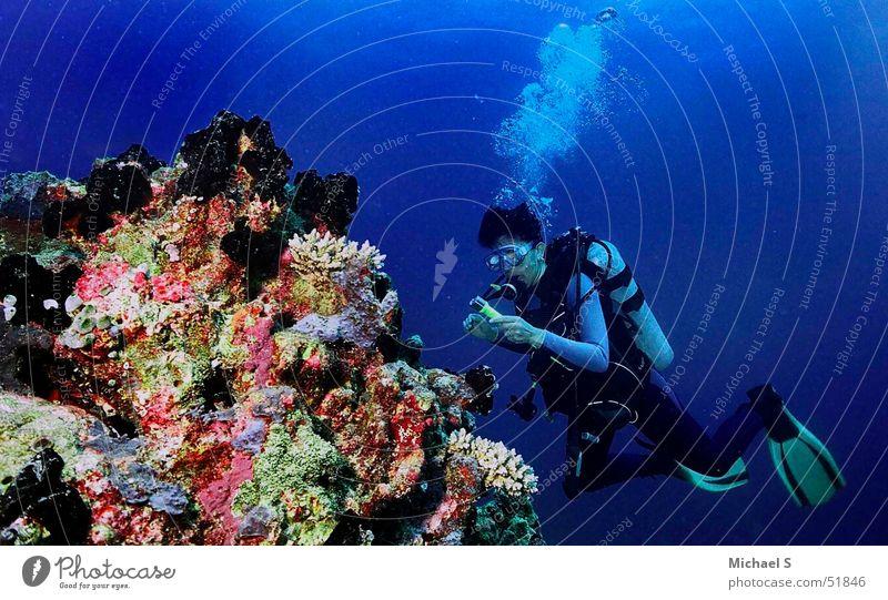 Tauchen Ferien & Urlaub & Reisen tauchen Korallen