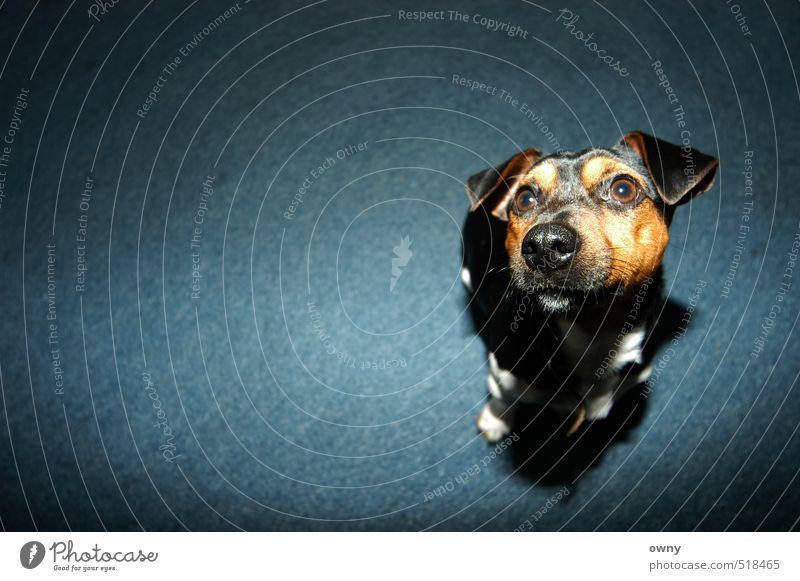 othlonicle Hund Kind Natur Tier Spielen Denken Kunst Büro Wohnung Raum Kindheit Lifestyle Erfolg warten niedlich beobachten