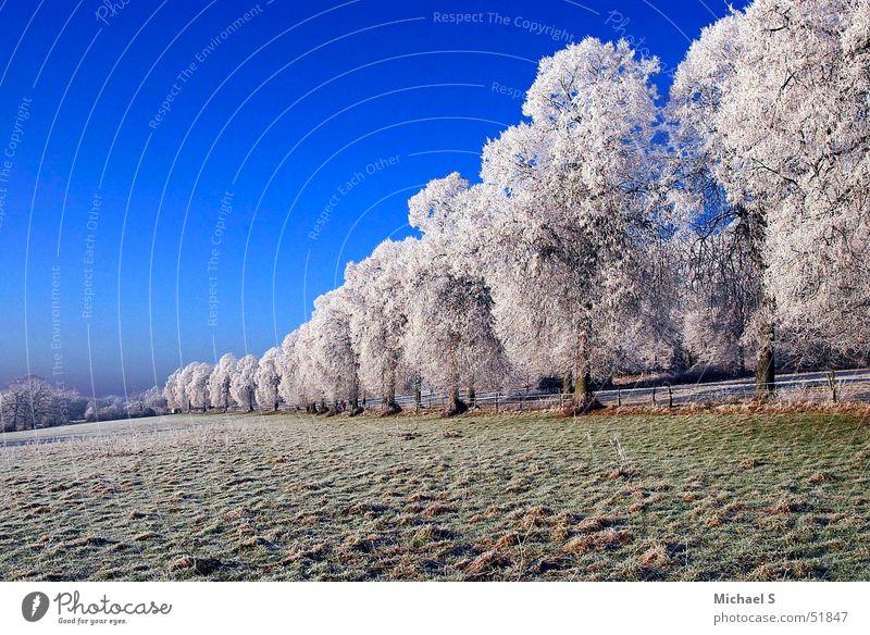Frost Winter kalt Landschaft Eis bizarr