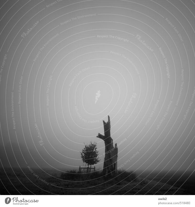 Stammbaum Umwelt Natur Landschaft Pflanze Horizont Klima Wetter schlechtes Wetter Nebel Baum Wildpflanze Setzling Baumstamm Baumstumpf alt dunkel Zusammensein