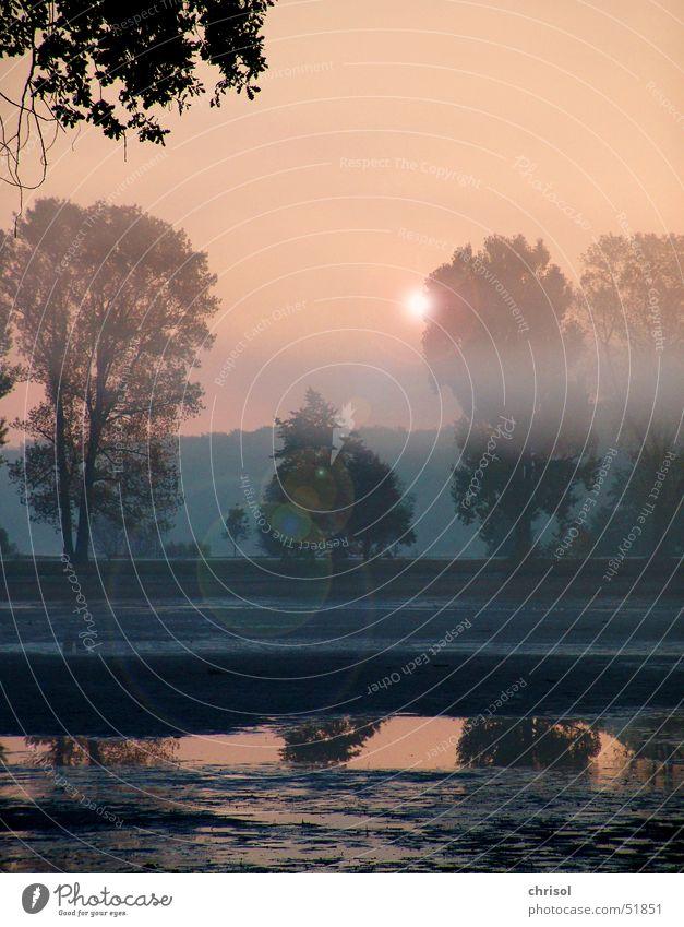 Morgendunst Baum Traurigkeit See Nebel Trauer Morgendämmerung