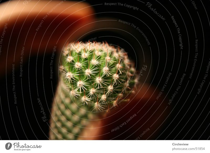 Guck doch mal! grün Pflanze schwarz Finger Spitze Topf Linse Kaktus Lupe Stachel Zimmerpflanze