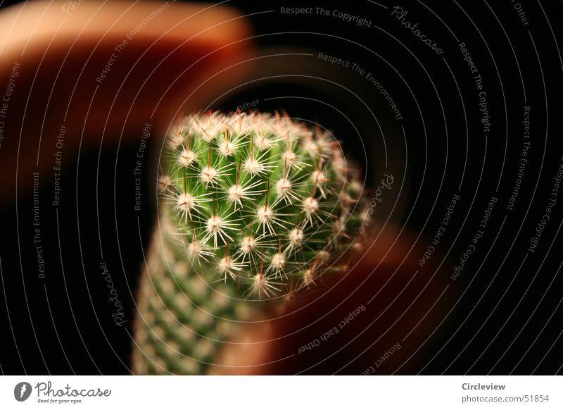 Guck doch mal! Kaktus schwarz Topf Pflanze Zimmerpflanze grün Finger Stachel Spitze black prick pricks pointed house plant Linse Lupe lense magnifying glass