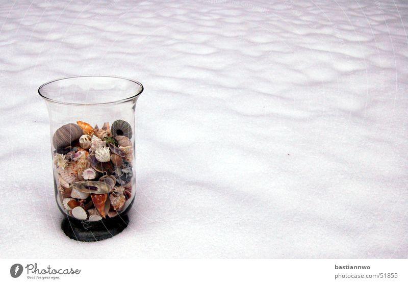 Schneemuscheln Winter kalt Schnee Glas Muschel Seeigel