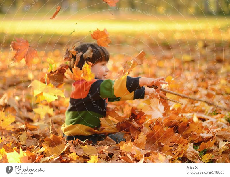 Dirigent Freizeit & Hobby Spielen Kinderspiel Mensch maskulin Kleinkind Kindheit 1 1-3 Jahre 3-8 Jahre Natur Herbst Schönes Wetter Blatt Garten Park Wald werfen