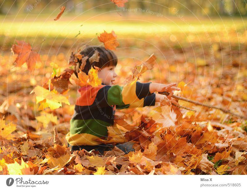 Dirigent Mensch Kind Natur Freude Blatt Wald Gefühle Herbst Spielen Garten Stimmung fliegen Park Freizeit & Hobby maskulin Kindheit