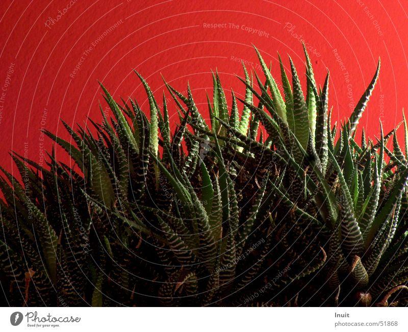 Urwald Blume Pflanze rot Wand Wachstum Stachel