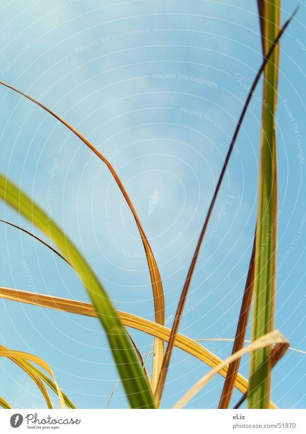 Grashüpfer Wolken grün Halm Froschperspektive Sonne schlechtes Wetter Wind Pflanze Himmel blau Blauer Himmel