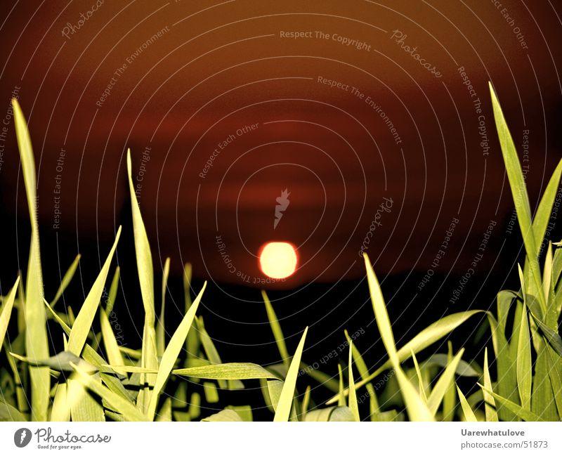 Sonnenuntergang in Essen Halm rot grün Nacht Langzeitbelichtung grass