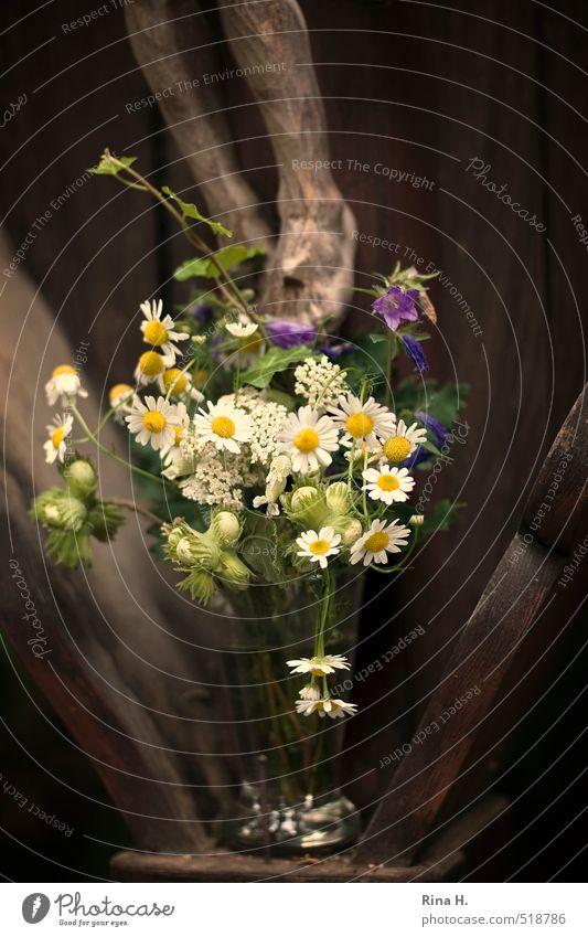 Blumen für Jesus Liebe Holz Religion & Glaube Beine Fuß authentisch Blühend Hoffnung Geschenk Christliches Kreuz Blumenstrauß Stillleben Respekt Kruzifix