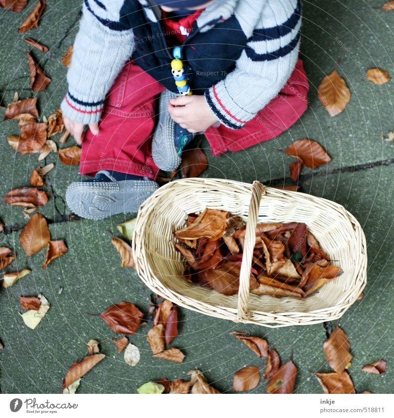 Herbst Freizeit & Hobby Kinderspiel Baby Kindheit Leben Körper 1 Mensch 0-12 Monate Natur Herbstlaub Blatt Garten Park Bekleidung Hose Jacke Schuhe Korb Bast