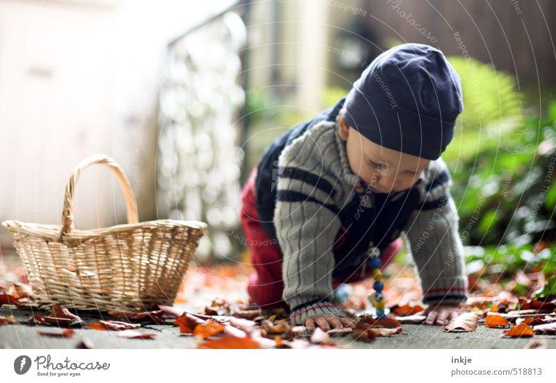 Herbst Freude Gesundheit Sinnesorgane Freizeit & Hobby Spielen Kinderspiel Ausflug Spazierweg Garten Baby Junge Kindheit Leben 1 Mensch 0-12 Monate Natur Blatt