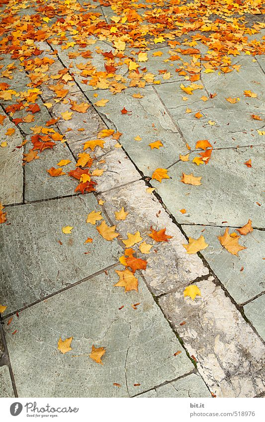 Orangenbaumblätter liegen auf dem Weg. Garten Herbst Wege & Pfade dehydrieren Klima Stimmung Stadt Wandel & Veränderung Herbstlaub herbstlich Herbstbeginn