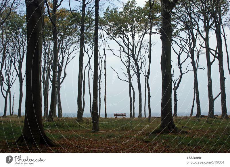 Gespensterwald mit Bank Himmel Natur Pflanze Baum Landschaft Wald dunkel kalt Umwelt Herbst natürlich hell Parkbank Buchenwald