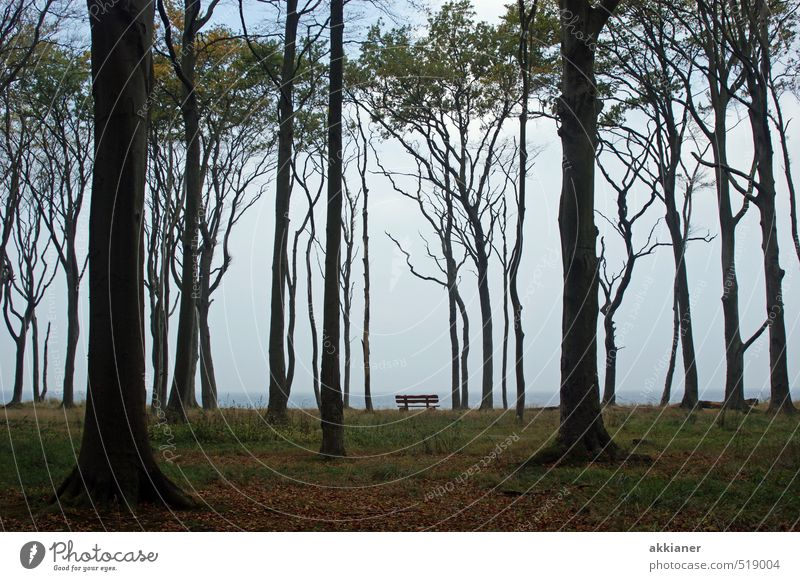 Gespensterwald mit Bank Umwelt Natur Landschaft Pflanze Himmel Herbst Baum Wald dunkel hell kalt natürlich Buchenwald Parkbank Farbfoto Gedeckte Farben