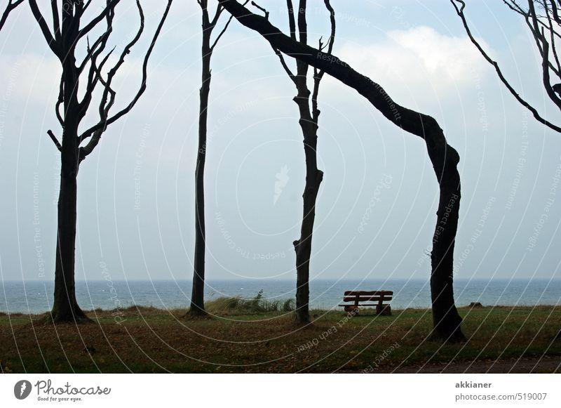 Ein wenig schief Himmel Natur Pflanze Meer Baum Landschaft Wald dunkel kalt Umwelt Herbst Küste natürlich hell Bank Ostsee