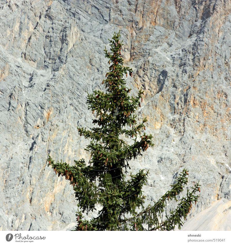 Zeitumstellung | O Tannenbaum Baum Landschaft Berge u. Gebirge Stein Felsen Idylle einzigartig Alpen Weihnachtsbaum Nadelbaum