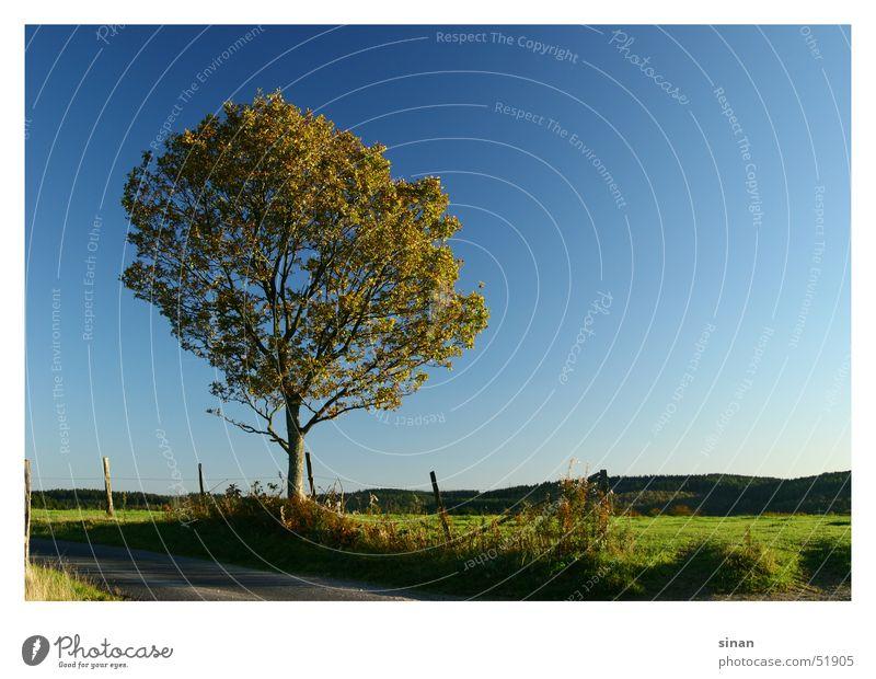 Der Baum Natur schön Himmel Sonne grün blau Pflanze Sommer Wärme Landschaft Horizont Physik Jahreszeiten Zaun Pol- Filter