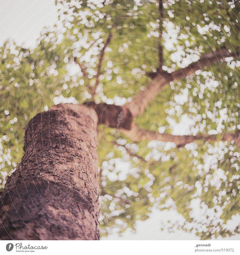 Tree Pflanze Baum natürlich braun grün Natur Umwelt stark oben Baumstamm Baumkrone analog Quadrat Außenaufnahme Unschärfe nachhaltig Baumrinde