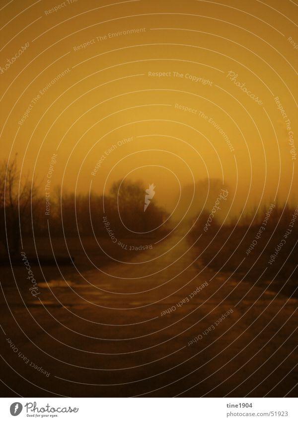dark and long Nebel Einsamkeit Baum Sträucher dunkel geheimnisvoll Licht Wege & Pfade Morgen Landschaft Traurigkeit