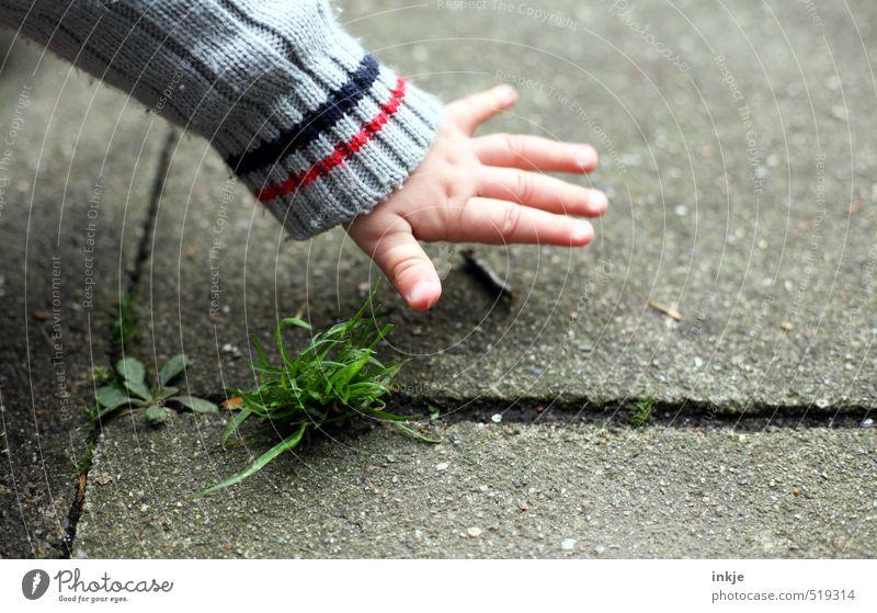 Herbst Sinnesorgane Freizeit & Hobby Spielen Kinderspiel Garten Baby Kindheit Leben Hand 1 Mensch 0-12 Monate Natur Schönes Wetter Gras Stock Park Platz