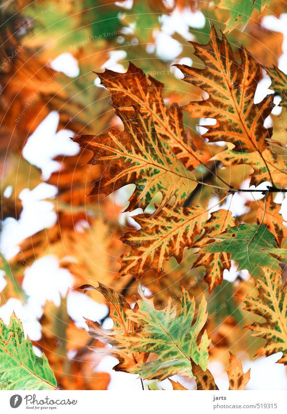 colourful Umwelt Natur Herbst Schönes Wetter Baum Blatt Wald natürlich schön braun gelb gold grün rot Gelassenheit ruhig elegant Farbfoto Außenaufnahme