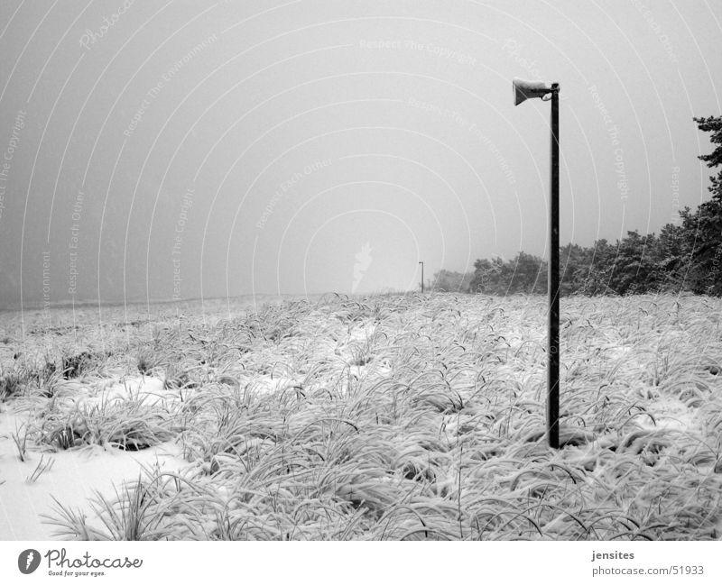Hauptsaison Winter Strand Lautsprecher Baum Gras Natur Deutschland Stranddüne Schnee snow Strommast Ostsee baltic sea