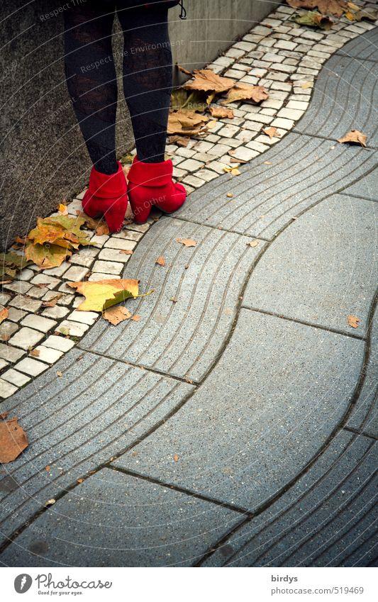 Herbstschick Lifestyle elegant Stil Junge Frau Jugendliche Beine 1 Mensch Herbstlaub Fußgänger Fußweg Strumpfhose Damenschuhe stehen ästhetisch positiv Erotik