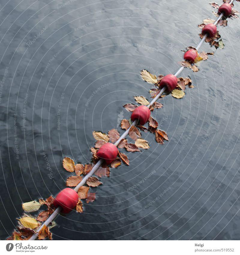 Herbstfänger... Umwelt Natur Wasser Schönes Wetter Blatt See Barriere Kunststoff Schnur berühren liegen Schwimmen & Baden dehydrieren ästhetisch authentisch