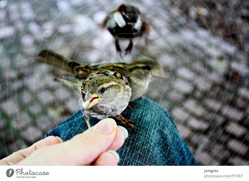 Ein Spatz auf dem Bein… Mensch Hand Vogel Vertrauen sanft Zärtlichkeiten füttern Futter Spatz