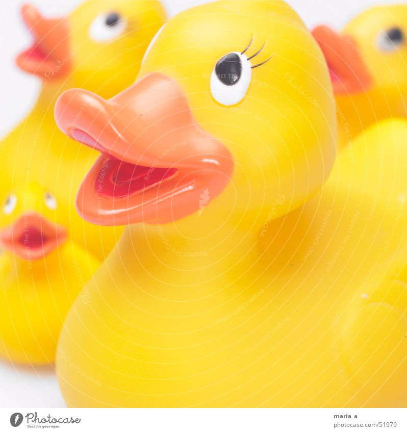 Quietscheentchen Badeente Spielzeug 4 Schnabel Schwärmerei Blick Fröhlichkeit Ente Auge Glück