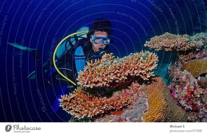 Taucher am Korallenblock Ferien & Urlaub & Reisen Malediven Taucher Korallen