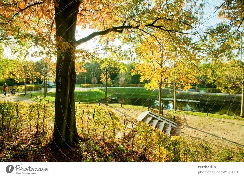 Tiergarten Natur schön Baum Landschaft Freude Blatt Umwelt Herbst Wege & Pfade Berlin Garten Wetter Park Lifestyle Klima Sträucher
