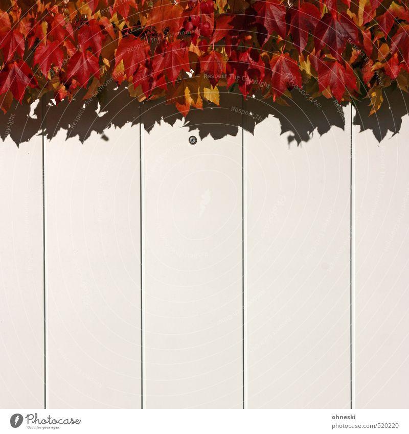 Herbst adé Blatt Wein Gebäude Garagentor rot Idylle Farbfoto mehrfarbig Außenaufnahme abstrakt Muster Strukturen & Formen Menschenleer Textfreiraum unten