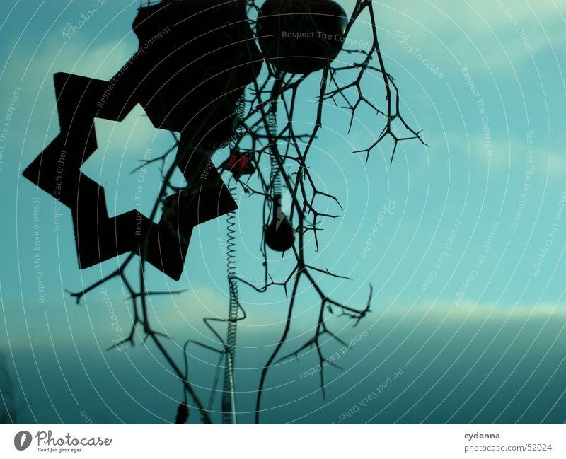Sternstunde Gesteck Silhouette schwarz Wolken Stimmung Winter Dekoration & Verzierung Himmel Makroaufnahme Nahaufnahme Stern (Symbol) blau Weihnachten & Advent