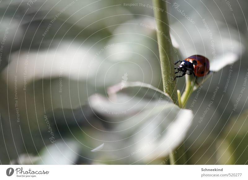 Halbkugeliger flugfähiger Käfer Umwelt Natur Pflanze Tier Gras Sträucher Wildpflanze Garten Park Wiese Wildtier Tiergesicht Flügel 1 Freundlichkeit schön Punkt