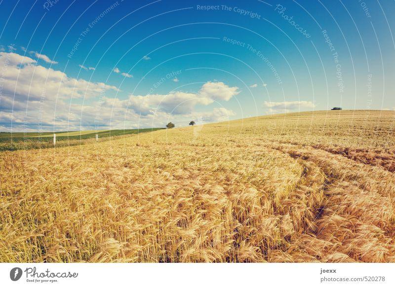 Kein Bett Natur Landschaft Himmel Wolken Horizont Sommer Schönes Wetter Feld frei frisch Gesundheit groß hell schön trocken Wärme blau braun grün weiß Kornfeld