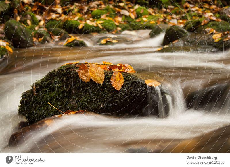 Fliessender Übergang Natur weiß Wasser Pflanze Blatt Tier schwarz Winter gelb Herbst Küste Stein braun orange Wellen Schönes Wetter