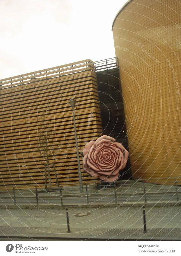 eine einsame Rose rosa Wand Statue Kunst Straße Berlin