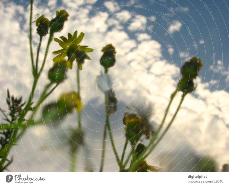 Ants view Blume Ameise Himmel Nahaufnahme Margerite Bonn Vogel Wiese See Erholung Trommel flower ant sky close blau blue grass Schwimmen & Baden chill