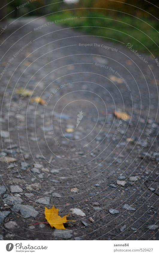 Abschied Herbst Blatt Wege & Pfade Stein Sand gelb grau Trauer Sehnsucht Heimweh Fernweh Einsamkeit warten Farbfoto Außenaufnahme Menschenleer