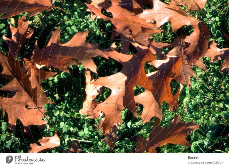 Herbstlaub Pflanze Blatt Wiese braun