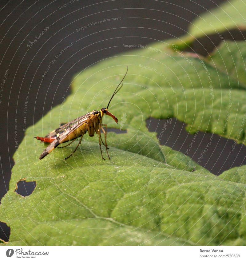 Was bist Du denn für einer? Tier Wildtier Käfer Flügel Insekt 1 gelb grau grün rot schwarz weiß Fühler Warnfarbe Blatt Blattadern Loch zerfressen beobachten nah