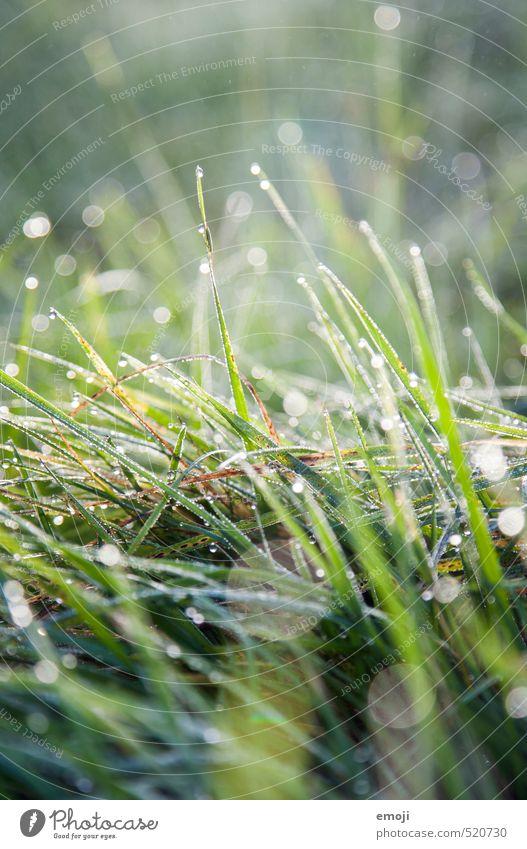 perlend Natur grün Pflanze Landschaft Umwelt Wiese Gras natürlich nass Wassertropfen saftig