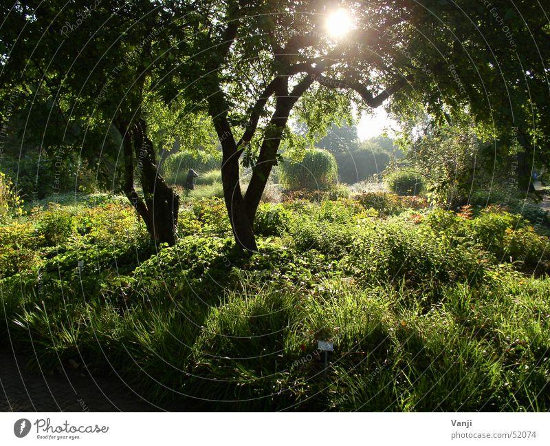 lichtdurchflutet Natur Pflanze grün schön Sonne Baum Wald Frühling Beleuchtung Gras Garten Stimmung hell Park Ausflug geheimnisvoll