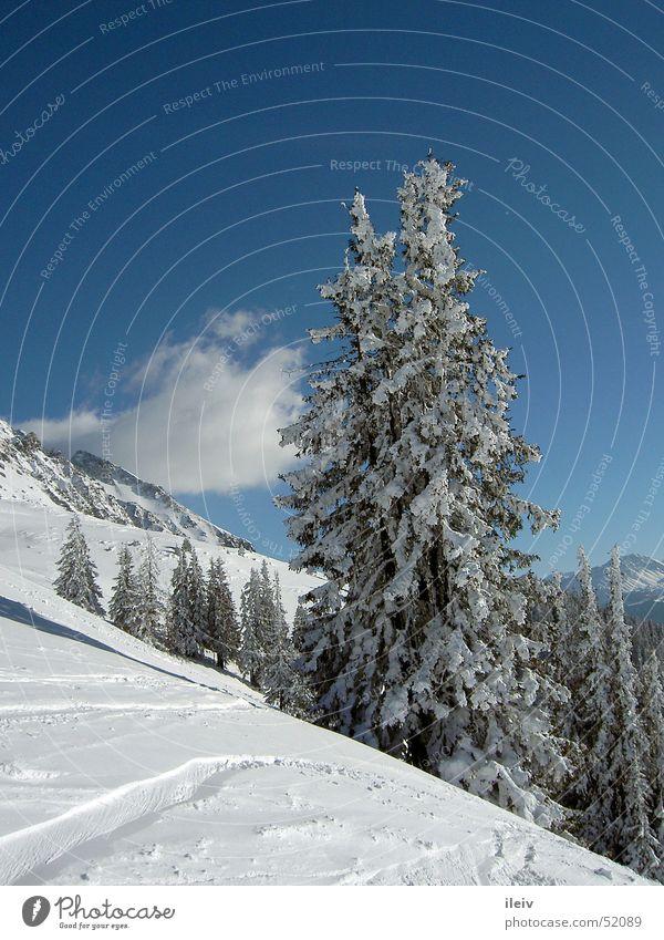 Neuschnee Baum Schnee Berge u. Gebirge Blauer Himmel